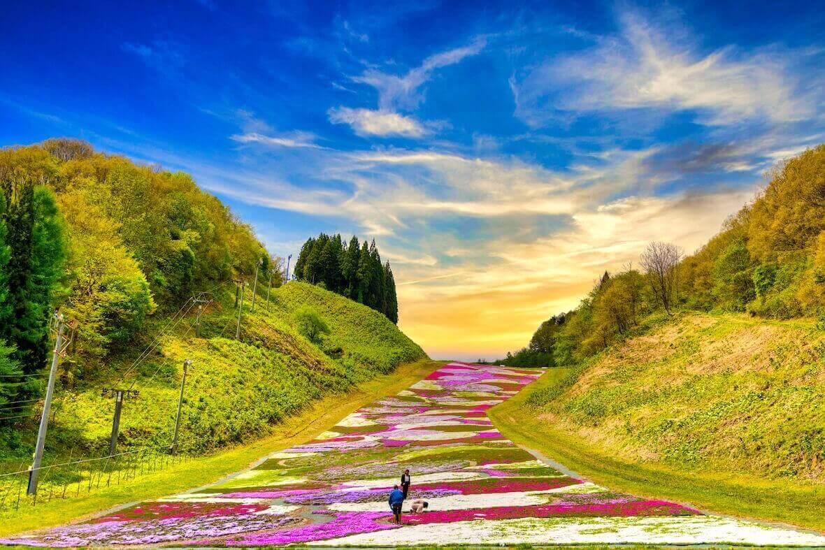 奥入瀬渓流スキー場の芝桜