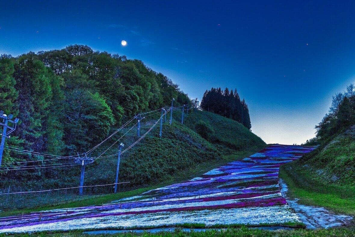 奥入瀬渓流スキー場の芝桜_夕暮れ